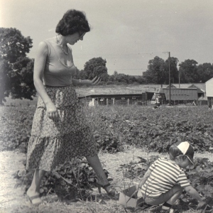 Strawberry picking, Epsom.