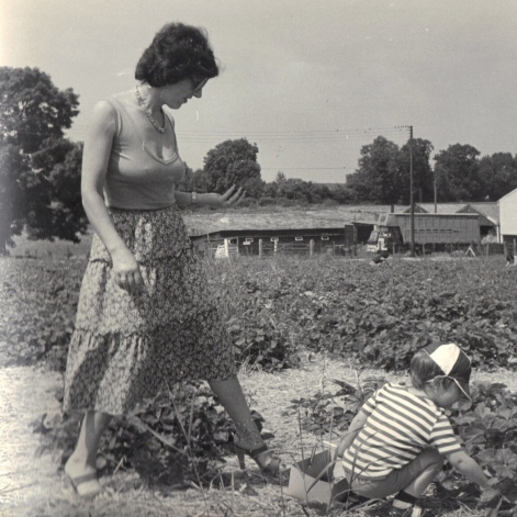 Strawberry picking, Epsom.
