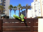Fillmore parrots