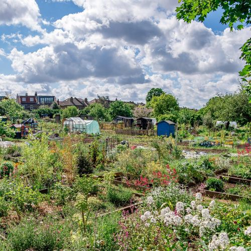 View over Northfields Allotments NW to SE_Credit - Nabil Jacob